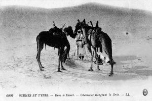 carte postale 1914 Maroc -chameaux mangeant le drin