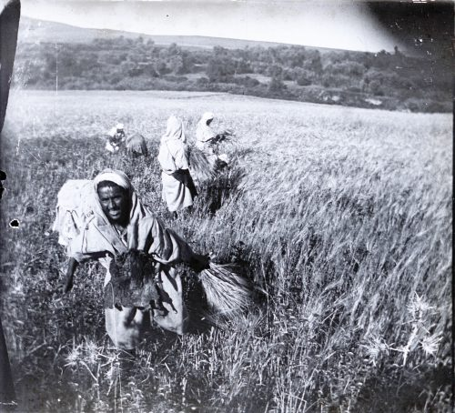 Maroc 1915-1916 La moisson - Photo © Joseph Miquel