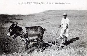 Laboureur marocain (carte postale)