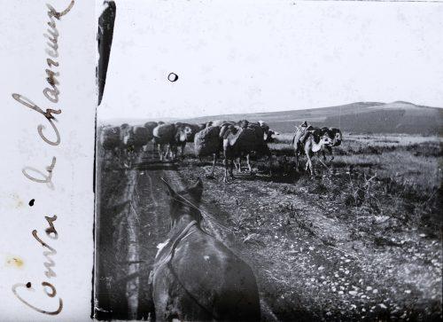 Convoi de chameaux (1)