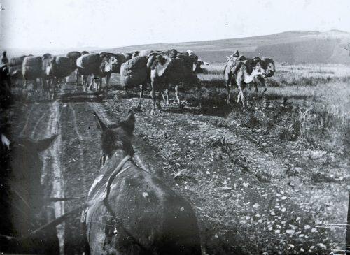 Maroc 1915-1916, convoi de chameaux