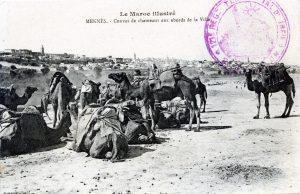 Meknès - convoi de chameaux aux abords de la ville - carte postale