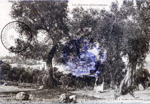carte postale Fez à travers les oliviers - Maroc 1915
